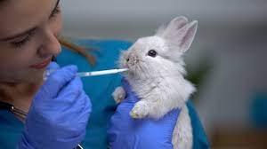 Thỏ bị ngộ độc