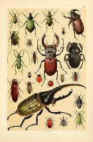 Vintage Illustrations Free Vintage Illustrations Of Wild Insects Free Vintage Illustrations