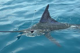 Resultado de imagen para pesca en mazatlan