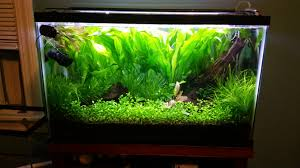 29 Gallon Tank Light 29 Gallon Planted Aquarium Imgur