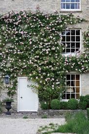 10 Fast Growing Flowering Vines  Best Wall Climbing Vines To PlantWall Climbing Plants