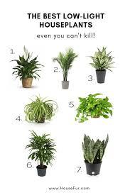 low light plants indoor plants