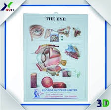 Biology Charts And Posters Human Eye 3d Anatomy Chart Poster Pvc Embossed Chart