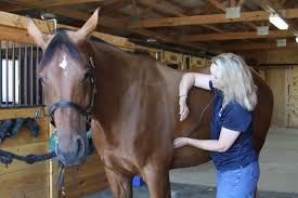 How To Take Your Horses Vital Signs