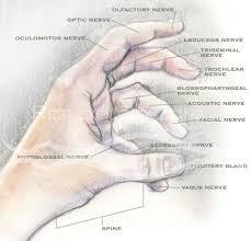 Cranial Reflexology Chart Reflexology Zone Hand Reflexology