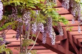 Image Result For Climbing Plant On Openwork Concrete Wall  Fence Climbing Plant