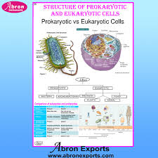 Chart Cells Prokaryotic Eukaryotic Cells Chart Cells