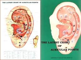 Chinese Ear Chart Auricular Points Chart