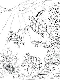 Sea Turtle Coloring Pages Printable Page Green Awesome Crayola
