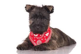 The 25 Best <b>Dog Bandanas</b> of 2020 - Pet Life Today