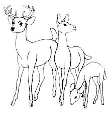 Small Picture Coloring Pages Draw A Deer Deer Coloring Pagejpg Pages clarknews