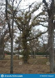 104 407 Mother Tree Photos Free Royalty Free Stock Photos From Dreamstime