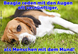 Beagle Zitate Und Sprüche