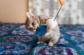 6 dangerous kitten toys you should avoid
