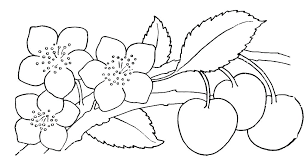 Printable Coloring Pages Spring Flowers Color Sheets Preschool