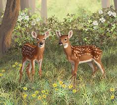 whitetail deer painting whitetail deer twin fawns by crista forest