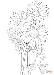 Small Picture Daisy Coloring Page Daisy Flower Coloring Pages Daisy Flower