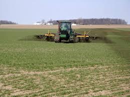 Технология выращивания озимой пшеницы ru Удобрение пшеницы