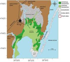 Frontiers Seagrass Removal Leads To Rapid Changes In Fauna