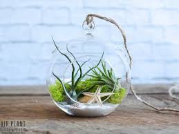 Sea Scape Hanging Air Plant Terrarium Kit