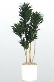 best low light office plants. Indoor Tropical Plants The Best Office For Including Gem Low Light And . A