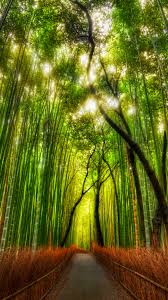Iphone Wallpaper Nature Zen