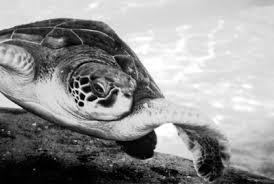 a better fuel ethanol teen essay about endangered extinct species a better fuel ethanol