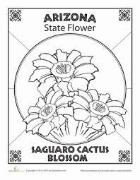 arizona state flower nature social arizona state flower worksheet education com on states worksheets