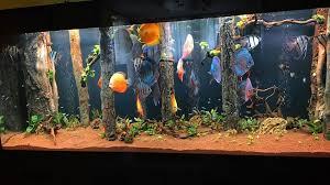 trees root rocks 3d aquarium backgrounds aquadecor 002