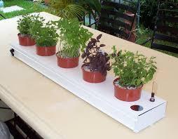 hydroponic herb garden.  Herb And Hydroponic Herb Garden