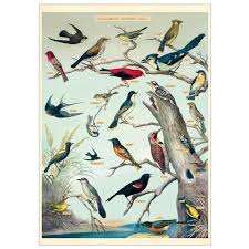 Wrap Audubon Birds