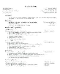 Objective Resume Samples Fascinating Great Objectives For Resumes Sample Career Objective For Resume