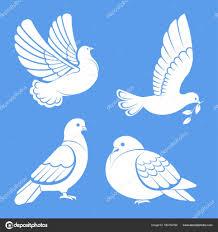 Holub Holubice Bílý Pták Roztaženými Křídly Sky Nebo Posezení