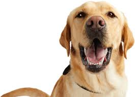 Depending on the amount you need to finance, carecredit® credit card provides the. Petco Pay Credit Card The Credit Card For Pet Owners Petco
