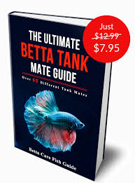 Betta Fish Chart The Ultimate Betta Tank Mate Guide Betta Care Fish Guide