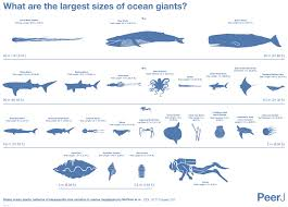 animal sizes chart comparison of the biggest animals in ocean business insider