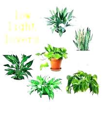 indoor tree plants trees safe for cats low light best house pets outdoor good bonsai uk
