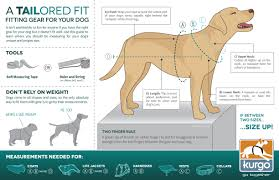 3 Easy Steps To Measure Your Dog For A Harness Coat Or Apparel