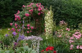 Flowers, Flower Wallpaper HD ...