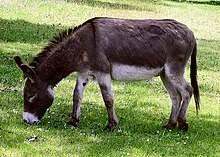 donkey hide price