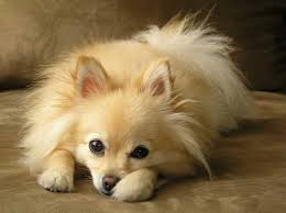 best dogs for kids small breed