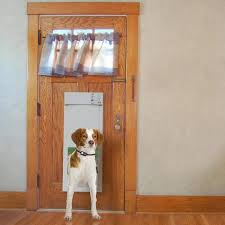 cat electric pet door for pets