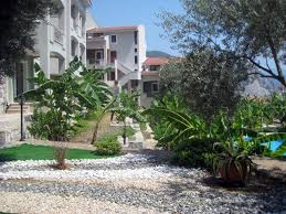 olive grove garden apartment