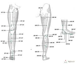 Leg Acupressure Points Chart Acupressure Points Chart In Legs Charts Of Acupressure Points