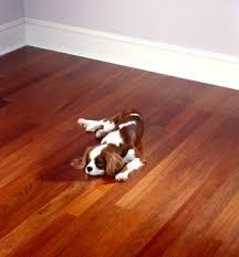 royal gany flooring room scene