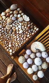 Seashells Of Indonesia Collecting And Painting In 2019