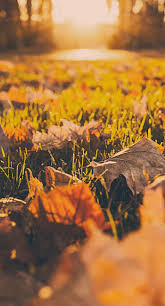 fall iphone 6 wallpaper. Simple Iphone IPhone 6s Plus  6 Wallpaper  Fall Ground Leaves Wallpaper  Iphone Disney In Fall Pinterest