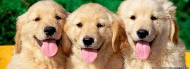 Image result for happy dog photo