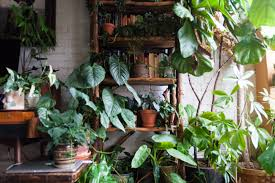 common indoor house plants