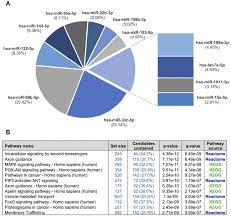 Fraction Size Chart A A Pie Chart Showing The 12 Mirnas Detected In The